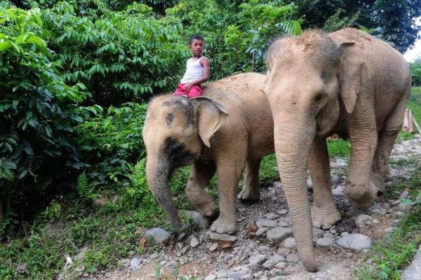 Menjelajahi Hutan dari Atas Punggung Gajah