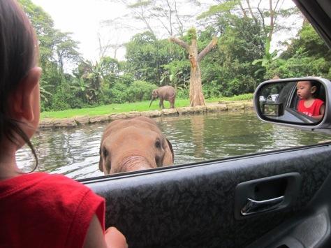 Oliq di Taman Safari waktu naik