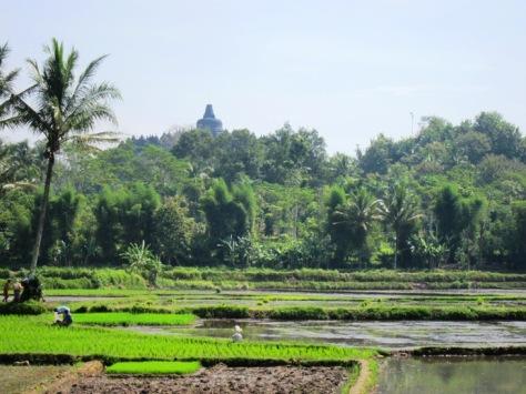 Stupa Borobudur mengintip dari balik pepohonan