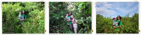Menembus hutan ke Cipanarikan