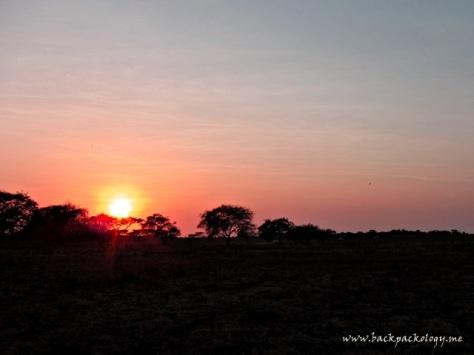 Siluet savana Africa van Java ketika matahari terbit