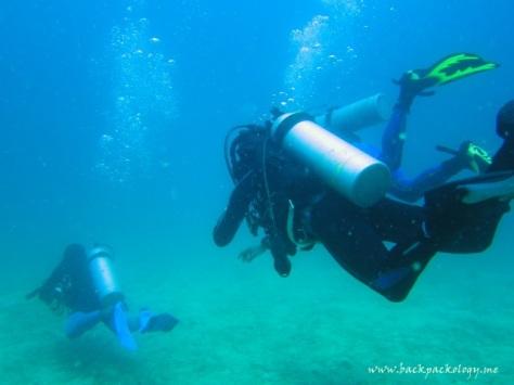 Menyelami keindahan hidden paradise di perairan Komodo