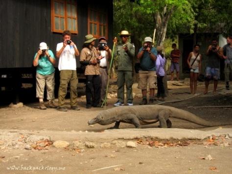 Seekor komodo melata dengan santainya, sementara turis-turis sibuk membidik dan Ki Joko Blogger sibuk mewawancara sang ranger