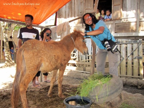Anak kuda sumbawa yang terlihat lucu dan sehat
