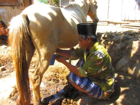 Kali ini seorang bapak yang memerah susu kuda, dengan sarung dan kopiah penampilannya sangat santai dan terlihat begitu akrab dengan kudanya