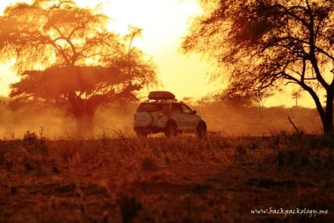 Kembali Terios melintasi padang rumput TN Baluran yang eksotis