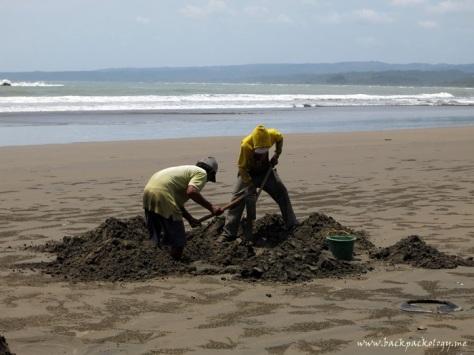 Para pekerja tengah menggali pasir pantai