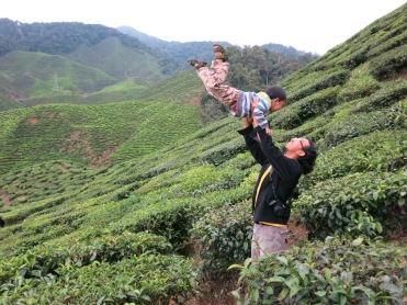 in the middle of tea plantation in Cameron Highlands