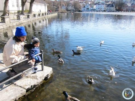 Memberi makan bebek dan burung