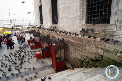 Anda bisa membeli makanan burung dan ikut memberi makan di depan New Mosque