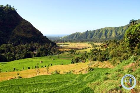 Sawah bertingkat-tingkat alias terasering yang banyak menghiasi landscape Pulau Bali
