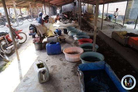 Pedagang ikan menempati lapak khusus yang beratap, umumnya ikan-ikan yang biasa dimakan, bukan ikan hias, ada di Pasar Hewan Godean