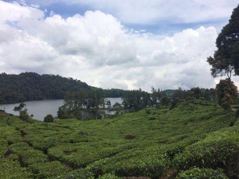 Situ Patenggang danau di tengah kebun teh